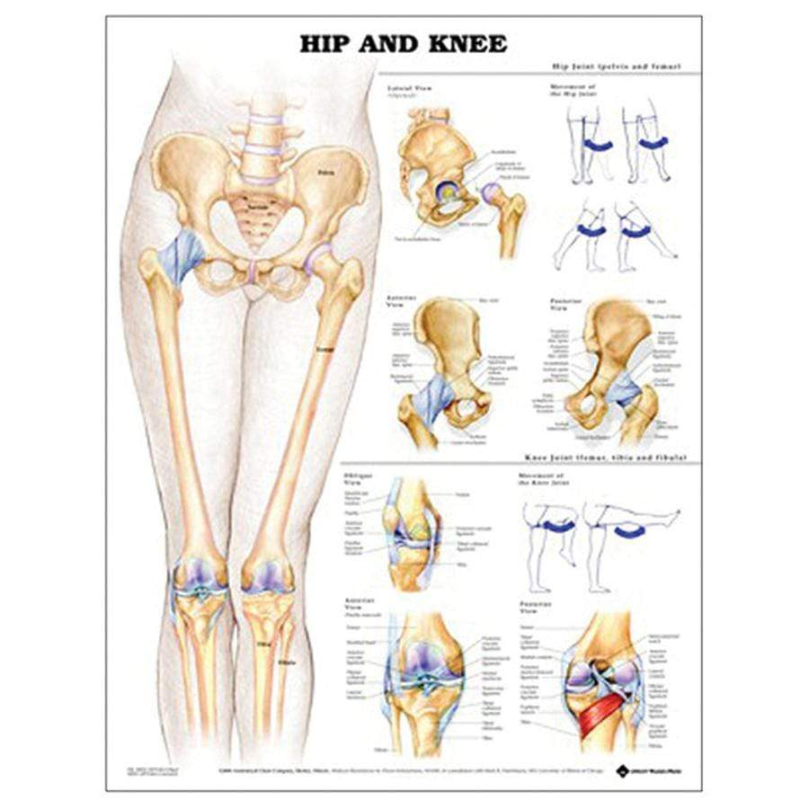 CHART HIP AND KNEE