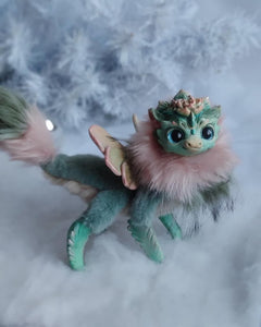 Monanthes Succulent dragon