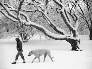 WINTER IN THE ARNOLD ARBORETUM