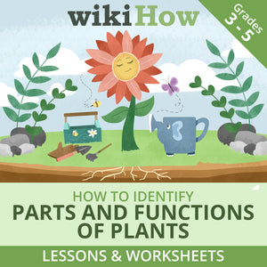 How to Identify Parts and Functions of Plants