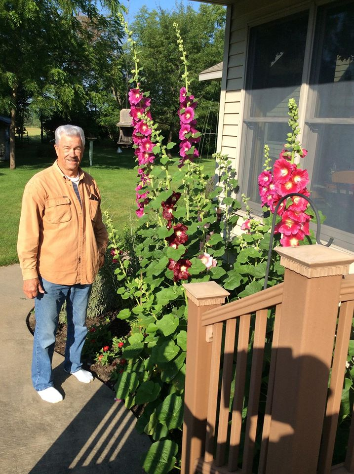 Korbi's Dad and the Hollyhocks