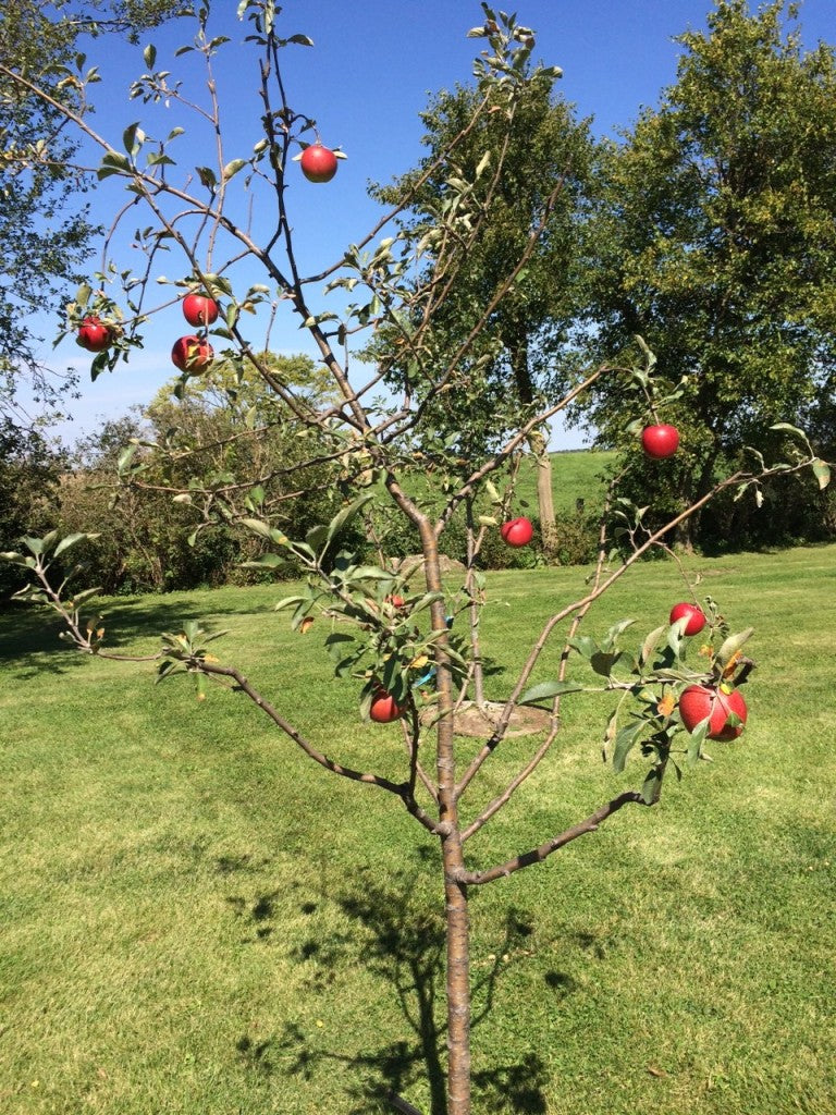 lucky break acres orchard