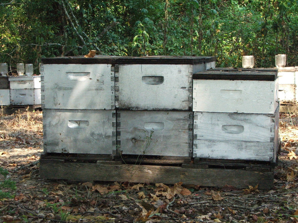 Beehives Lucky Break Acres