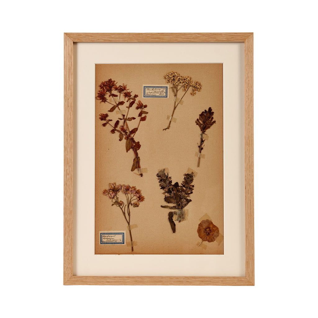 Dutch Herbier Specimen 08