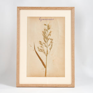 French Herbier Specimen 10