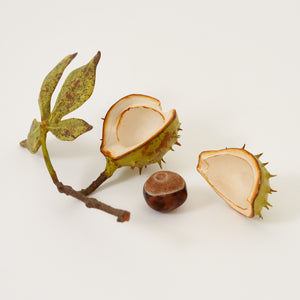Half Shell & Removable Nut With Lid And Tiny Leaf