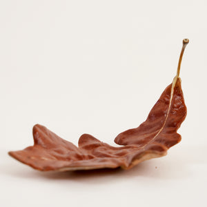 Medium Oak Leaf - Brown
