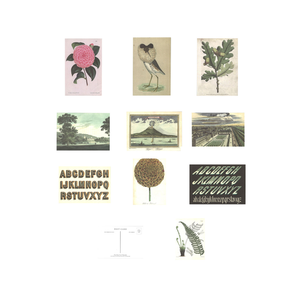 Flora, fauna, views & typography - pack of 10 assorted postcards
