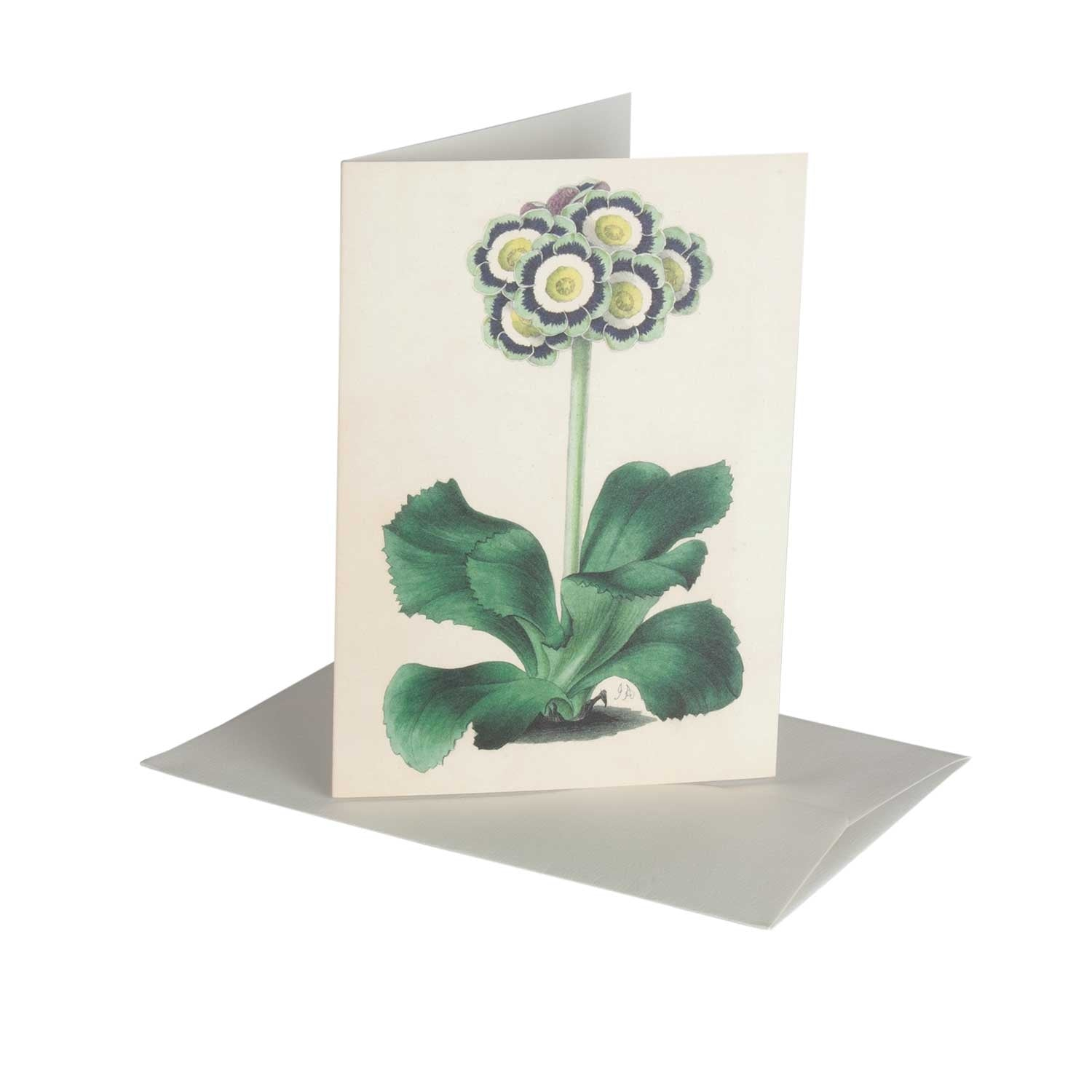 Aricula - Greeting Card