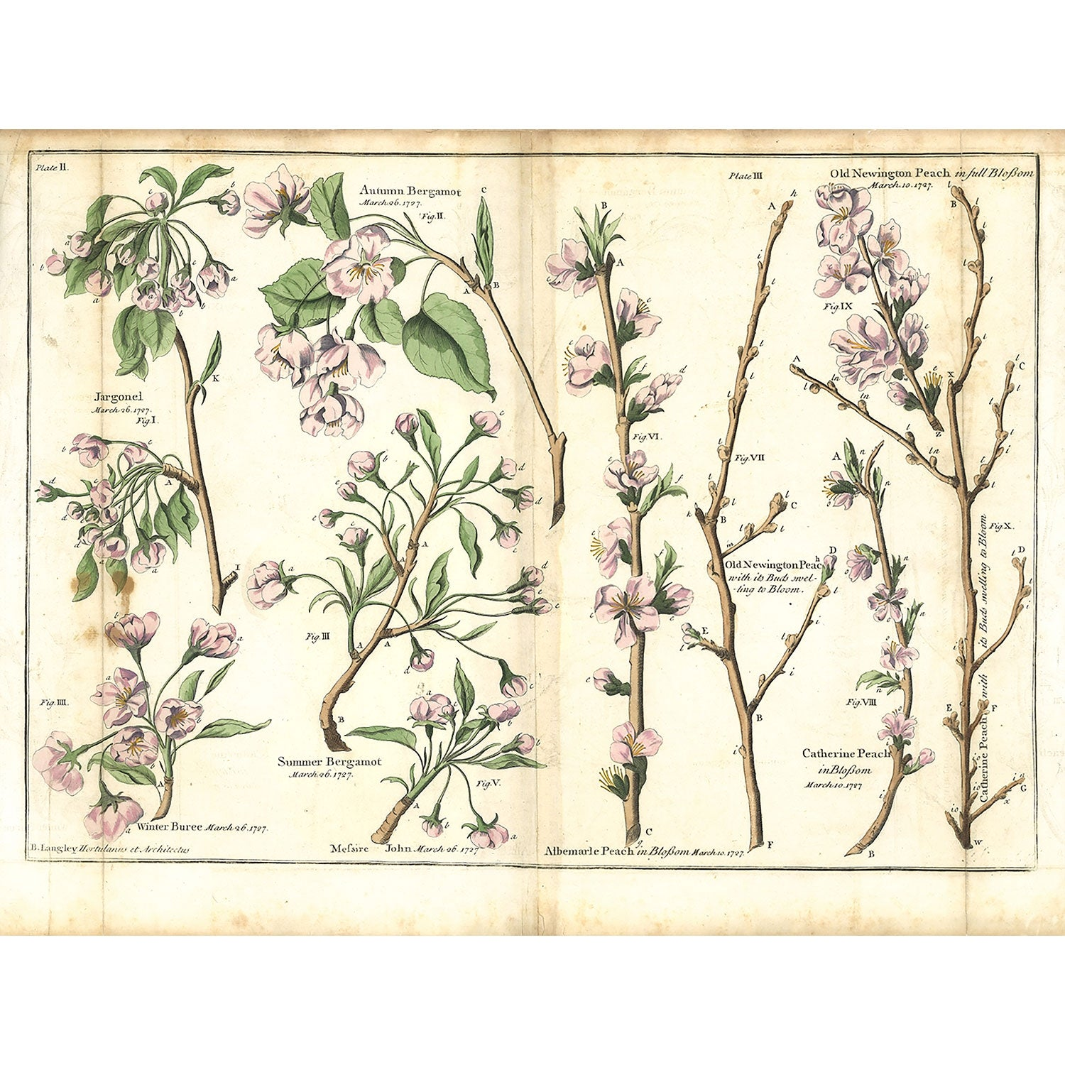 Plate II - The Illustrated Garden, 1729 by Batty Langley
