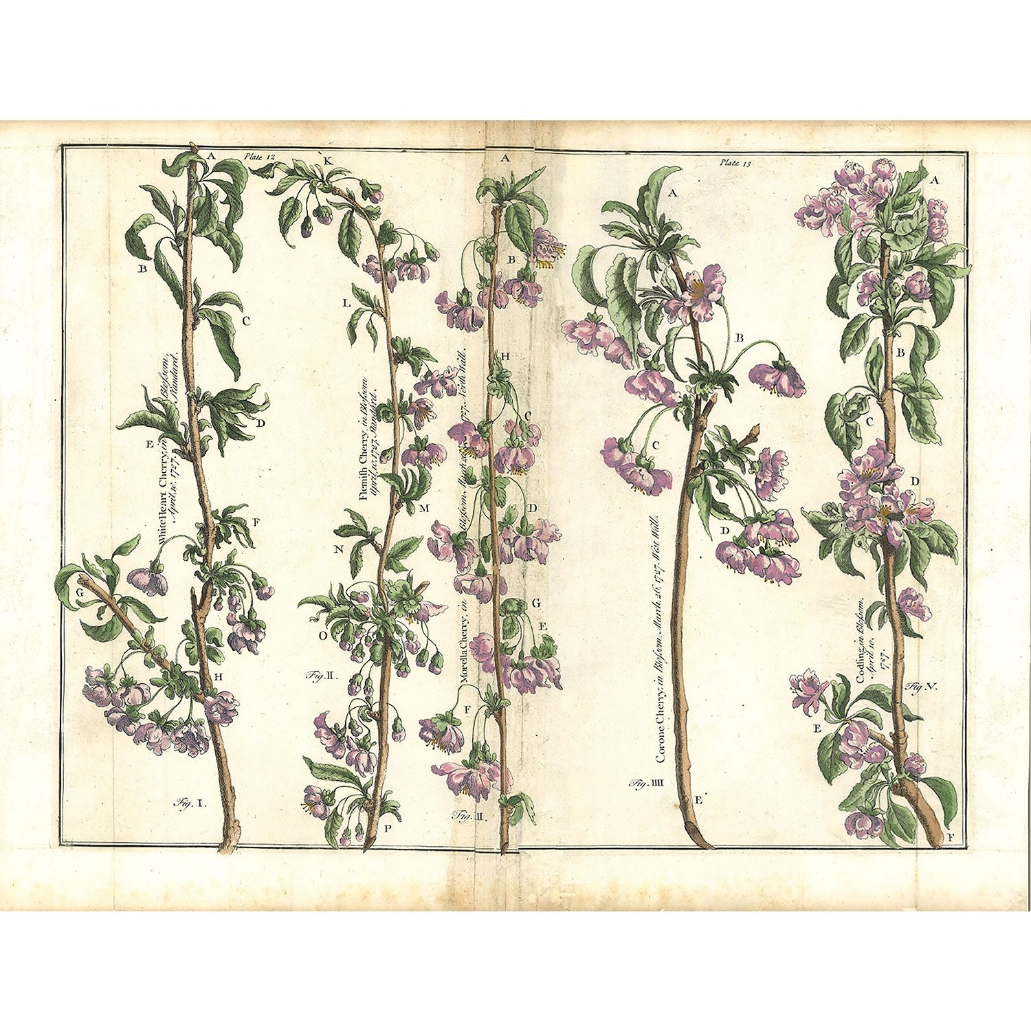 Plate I2 - The Illustrated Garden, 1729 by Batty Langley