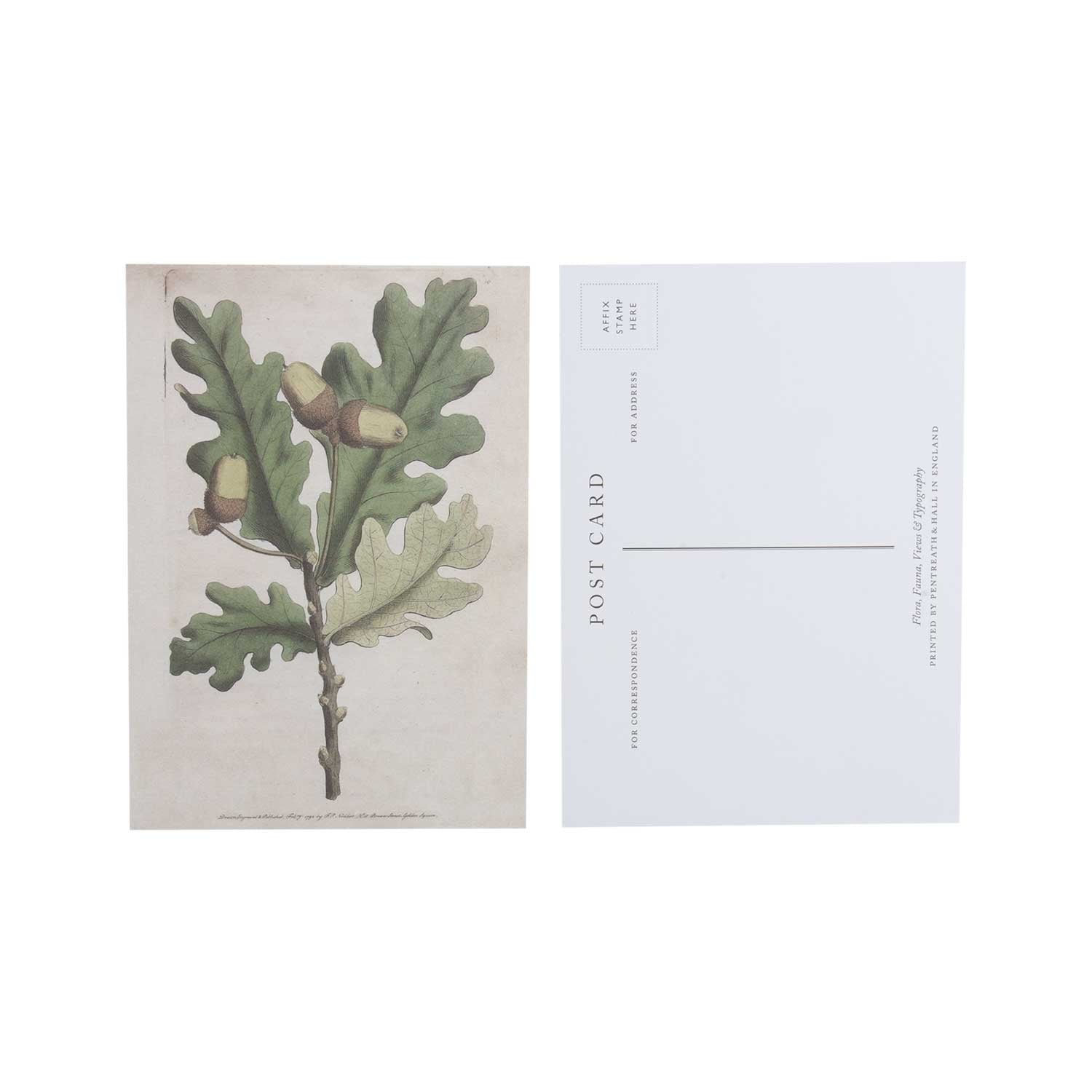 Quercus robur - pack of 10 postcards