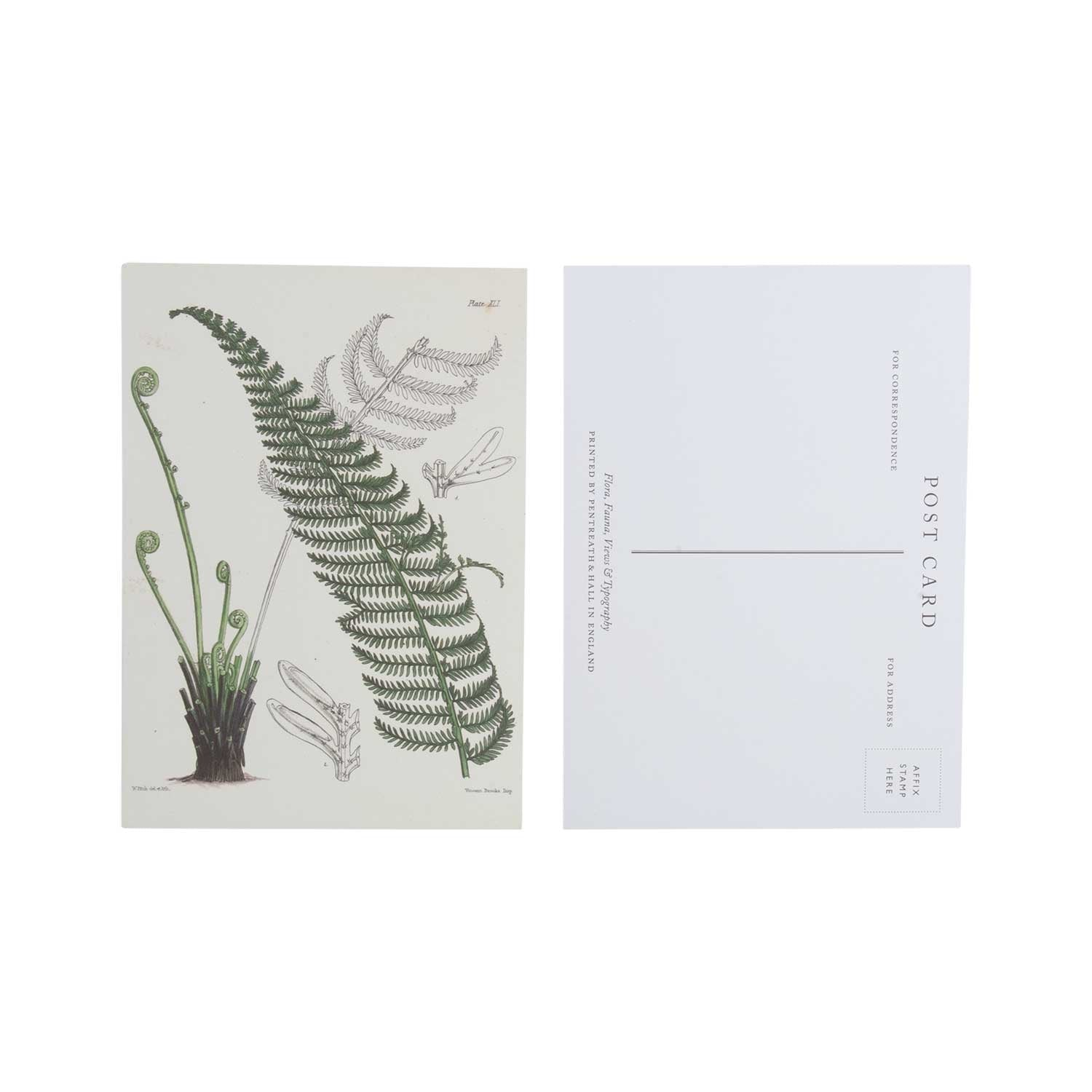 Tree fern - pack of 10 postcards