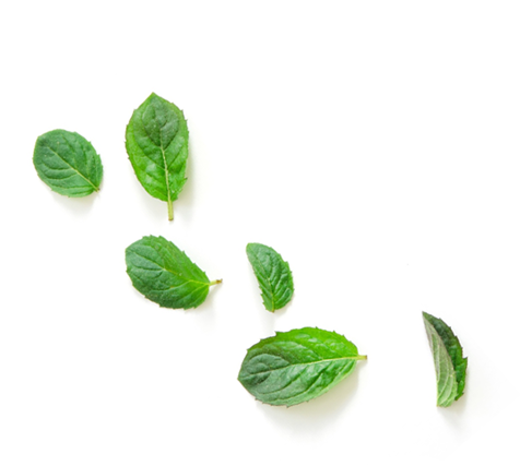 grouping of mint leaves - peppermint is the main ingredient in Fireworks - Lubilicious clitoral stimulation gel