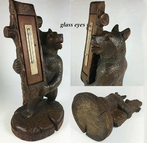 "Antique Black Forest HC 8.5"" Tall Bear Thermometer Stand, Glass Eyes, St. Moritz"