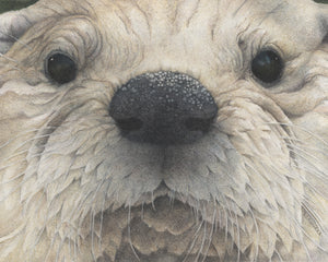 Florida Faces series: Otterly Adorable
