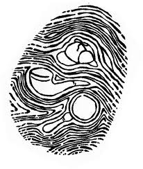 You Know You Are a Detective When... - Fingerprint