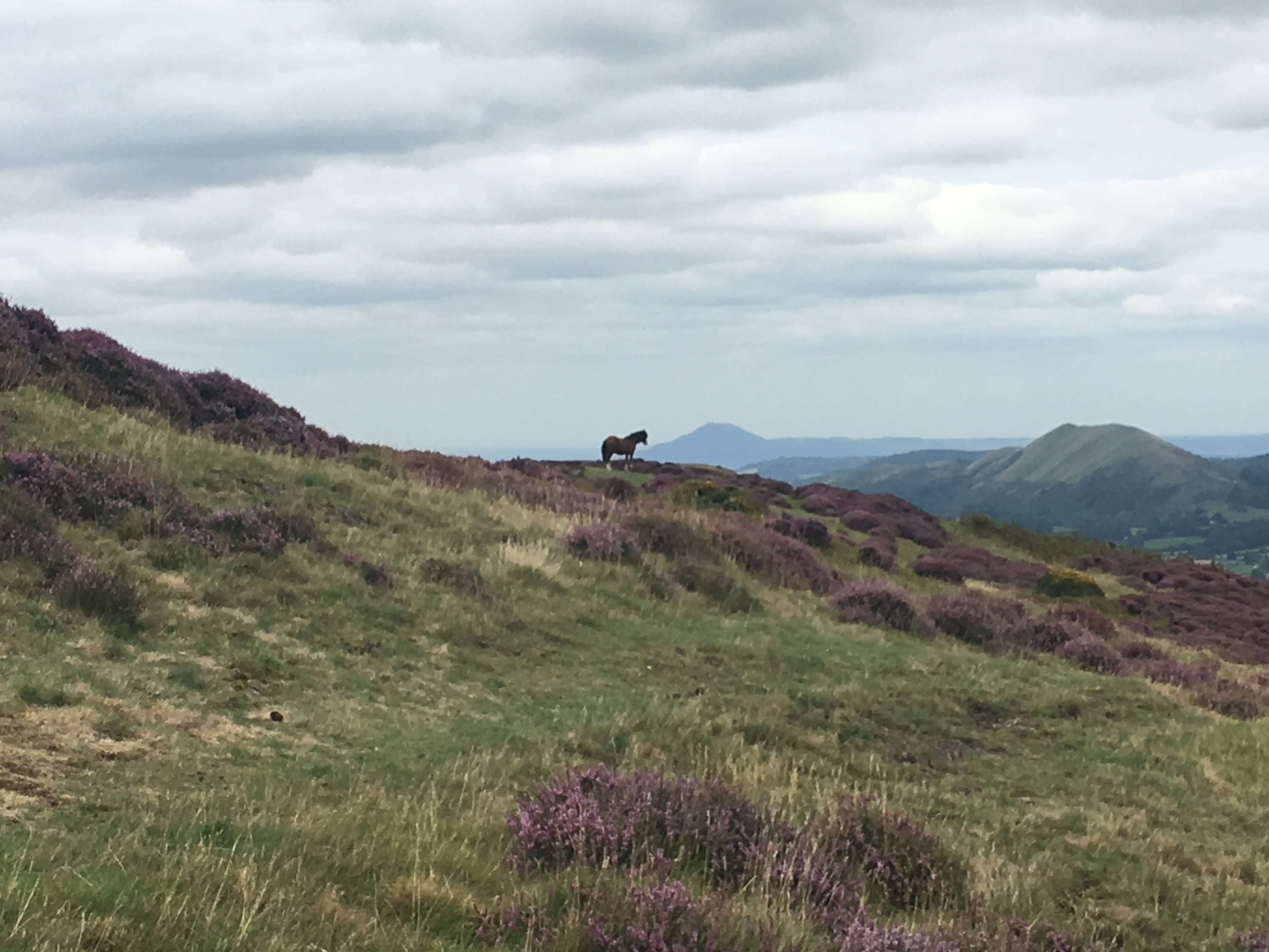 Things to do in the Shropshire Hills - The Long Mynd