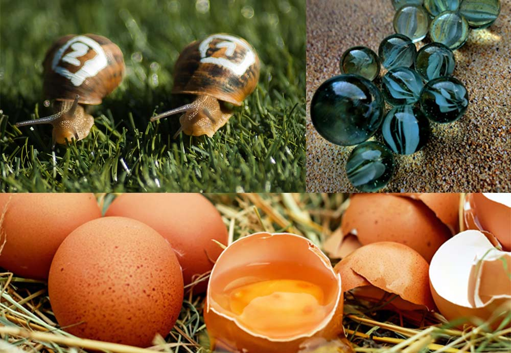 Try out snail racing, marbles or egg throwing!