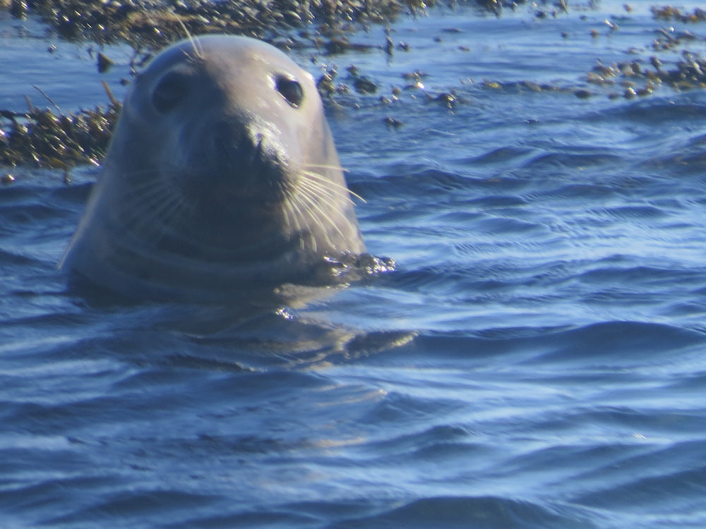 A day out in the fresh air from Mull - Treshnish Isles Wildlife