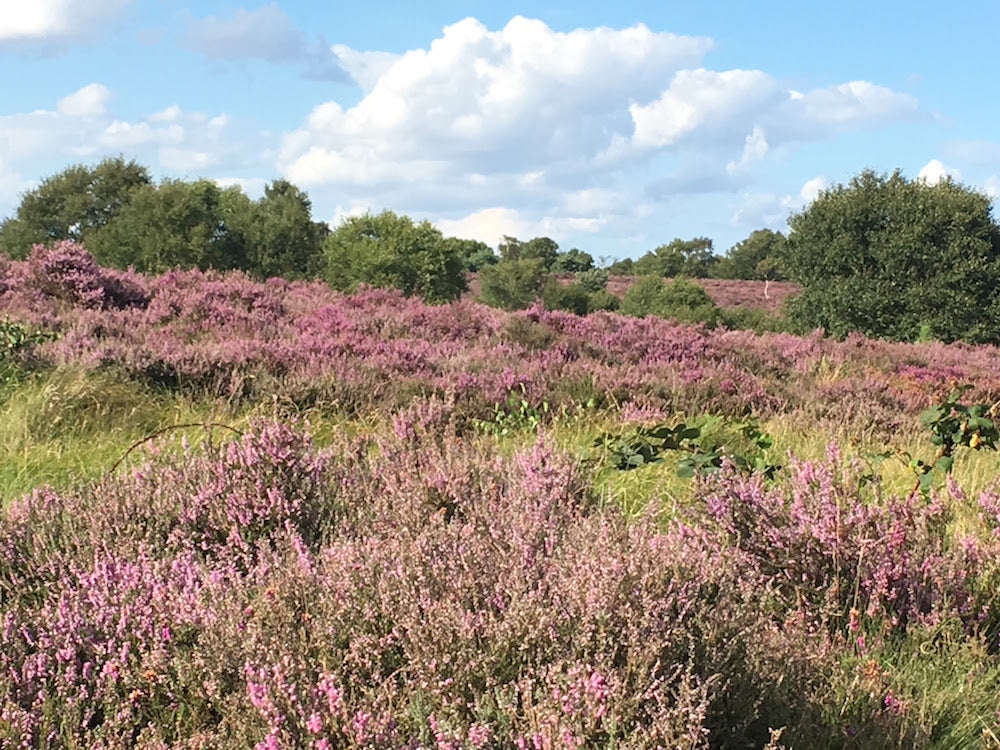 Things to do on the Suffolk Coast - Minsmere Nature Reserve - RSPB