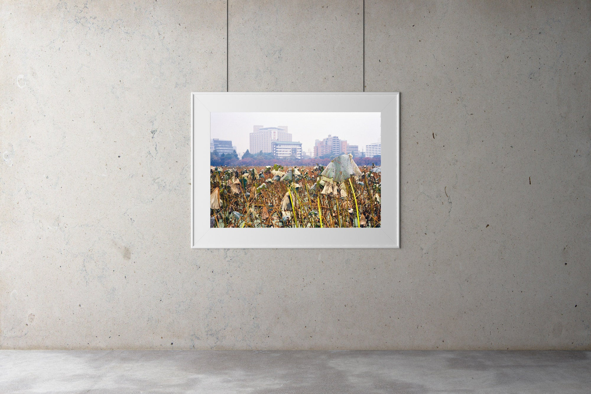 A photograph of a field of Kanjuji plants in Tokyo in winter. There are tall buildings in the background.  Tokyo Japan. Artwork Prints, wall art, Japan, Osaka, Photographic prints,, Framed artwork,  Posters  Photography Photography for sale, Film photography, Vintage photo style,  Interior design, Film photography, Pictures framed, artwork, travel photography, 35mm film, urban photography, street photography for sale,