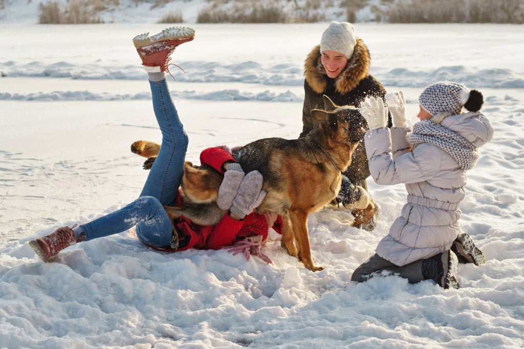 Walking the Dog in Cold Weather: Yes, Your Kids Can Do This