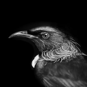 Tui - Wall Art Black and White 40x40