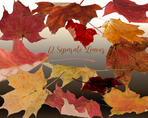 Autumn Fall Leaves Photoshop Overlays
