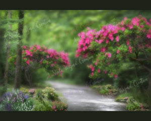 Trail Path Floral Spring Background #2