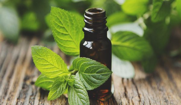 Essential oil -Peppermint   with a bold fresh and minty aroma