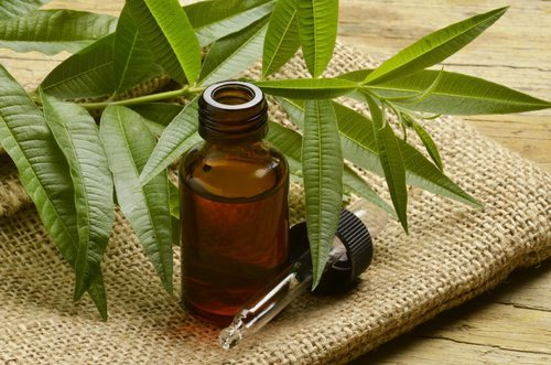 Essential Oil -Tea Tree  - with a warm & spicy medicinal aroma