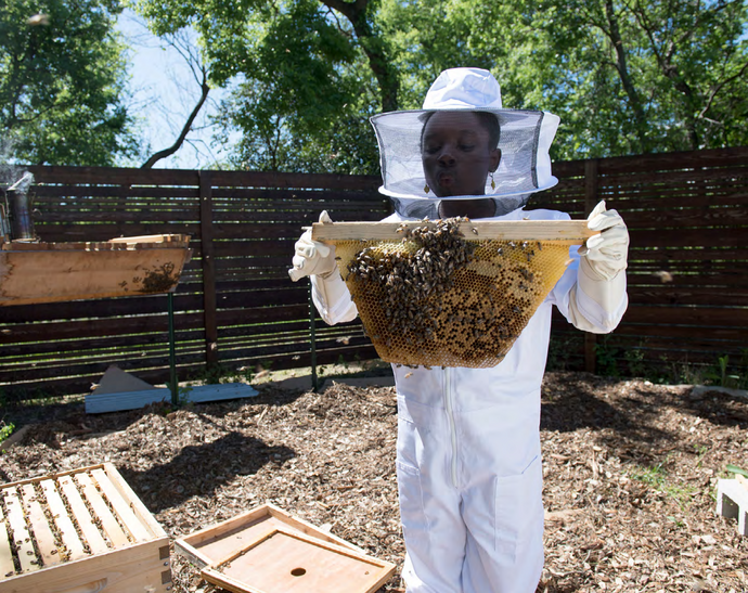 Bees to Business: A 4-year-old idea becomes a buzzing company