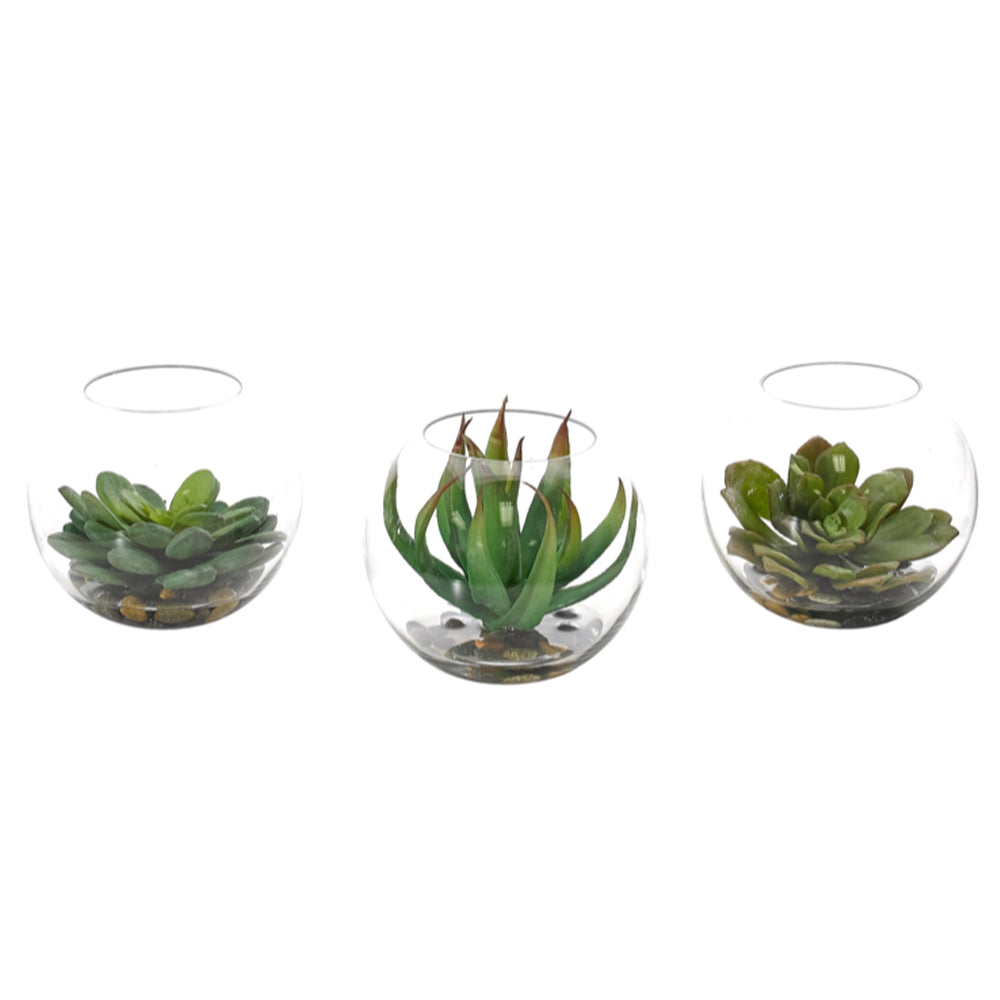 Succulent | Set of 3