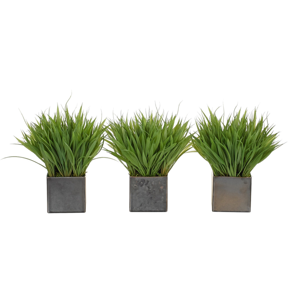 Grass | Set of 3