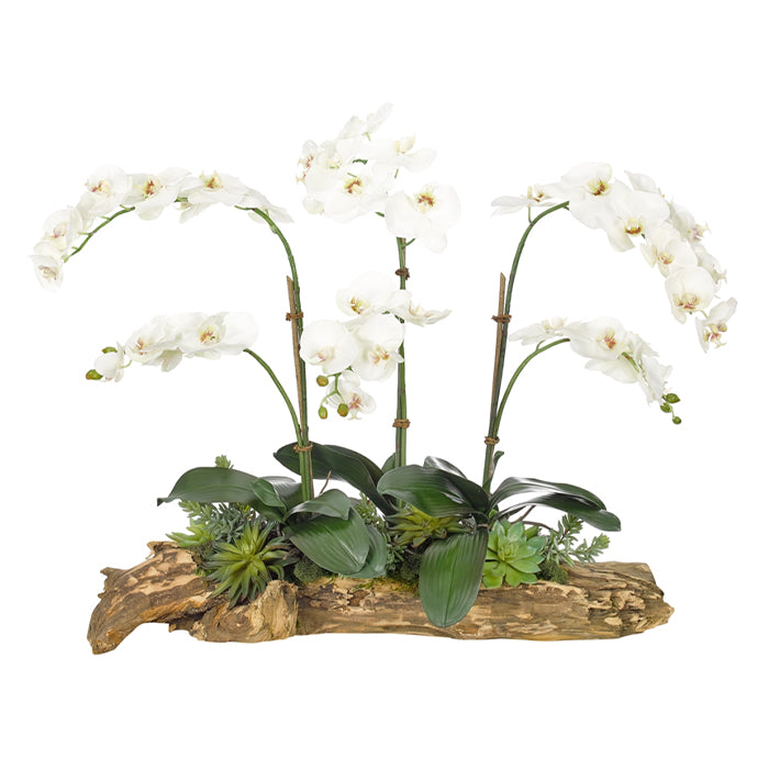 Orchid Succulent, White, Wood Planter