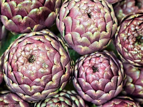 Artichoke, Romanesco - LifeForce Seeds