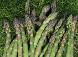 Asparagus Connover's Colossal -  Organic Heirloom vegetable seed Australia LifeForce Seeds