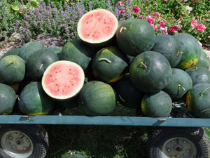 Watermelon, Blacktail Mountain - LifeForce Seeds