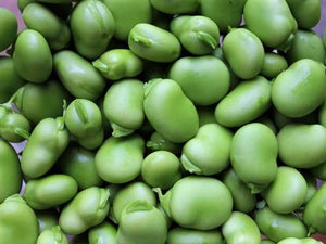 Bean Broad Coles Dwarf -  Organic Heirloom vegetable seed Australia LifeForce Seeds