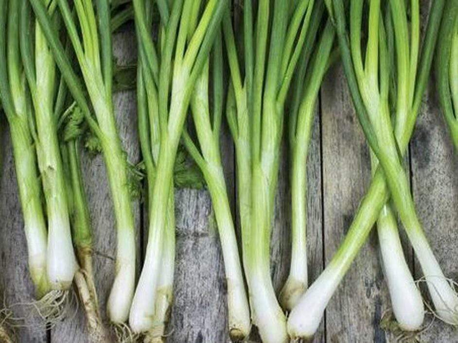 Bunching Onion Tokyo Long White -  Organic Heirloom vegetable seed Australia LifeForce Seeds