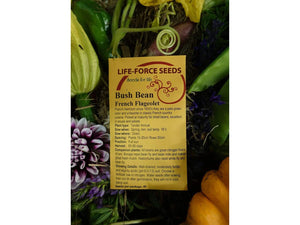 Bean Bush French Flageolet - LifeForce Seeds
