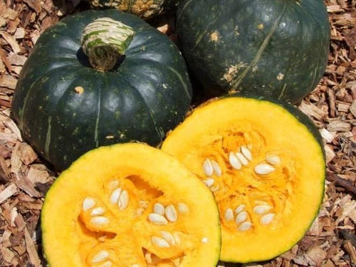 Pumpkin, Buttercup -  Organic Heirloom vegetable seed Australia LifeForce Seeds