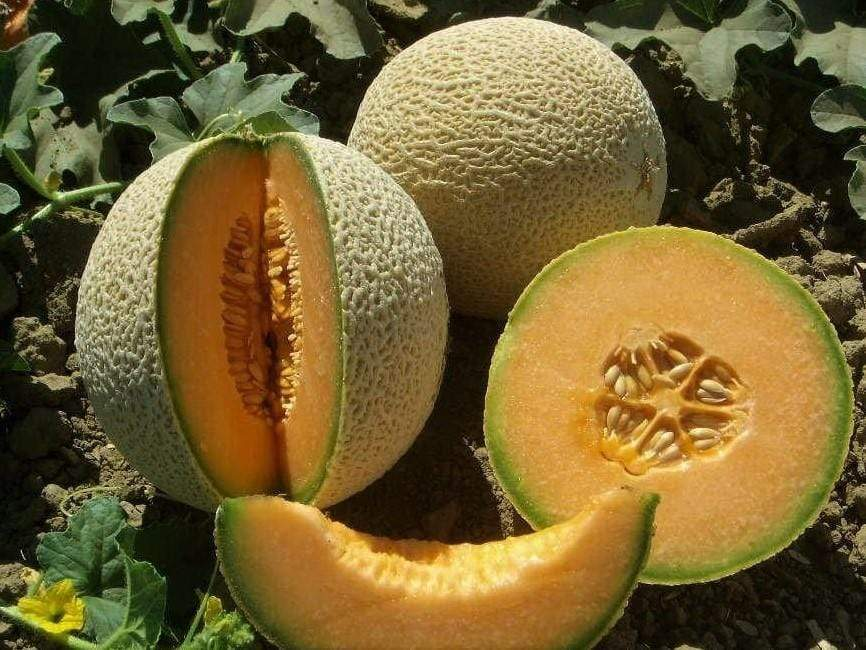 Rockmelon, Hearts of gold - LifeForce Seeds