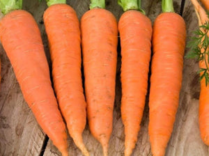 Carrot All Seasons - LifeForce Seeds