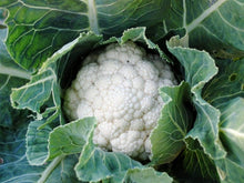 Load image into Gallery viewer, Cauliflower, Snowball Improved - LifeForce Seeds