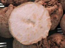 Load image into Gallery viewer, Celeriac Giant Prague -  Organic Heirloom vegetable seed Australia LifeForce Seeds