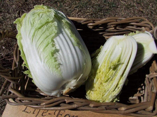 Chinese Cabbage, One Kilo Slow Bolt F1 -  Organic Heirloom vegetable seed Australia LifeForce Seeds