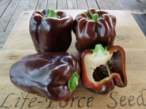 Capsicum Chocolate Beauty -  Organic Heirloom vegetable seed Australia LifeForce Seeds