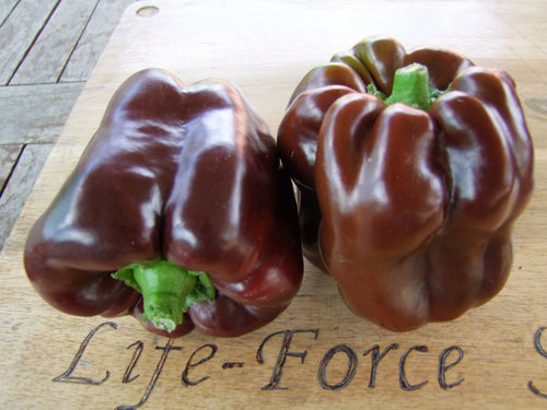 Capsicum, Chocolate Beauty x 3 pots - LifeForce Seeds